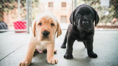 Martin Place to be filled with puppies for an epic lunchtime patting session this Friday!