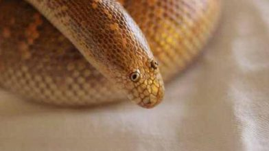 This derpy looking snake is causing a ruckus on the internet