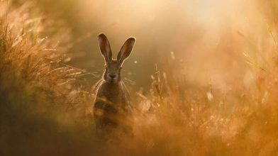 Check out the extraordinary winners from the GDT Nature Photographer of the Year