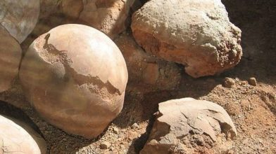 66 million-year-old egg the size of a football discovered in Antarctica