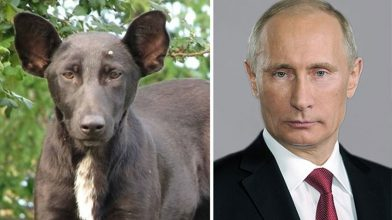 Here is a collection of animals that look like celebrities