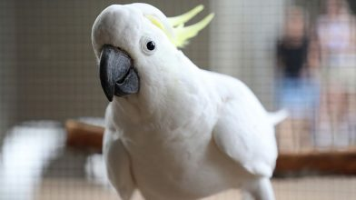 Enjoy this incredible video of a cockatoo dancing to different ringtones